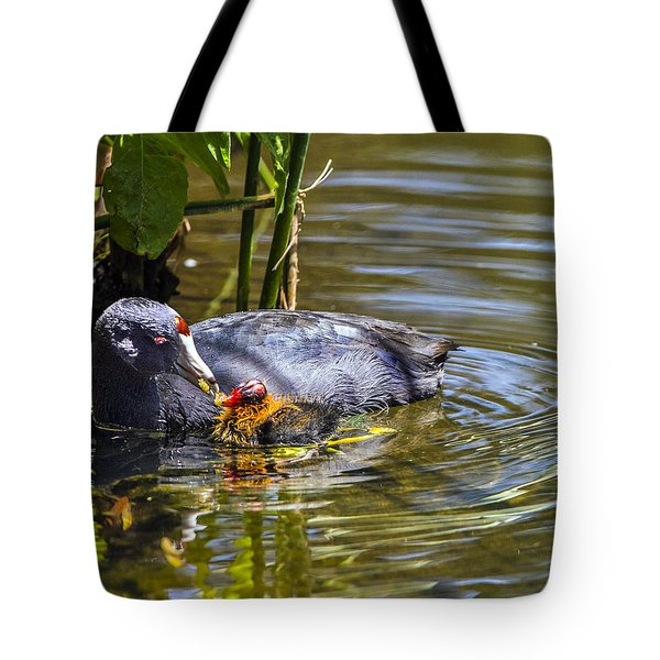 Andean Coot Feeding Her Chick Tote Bag