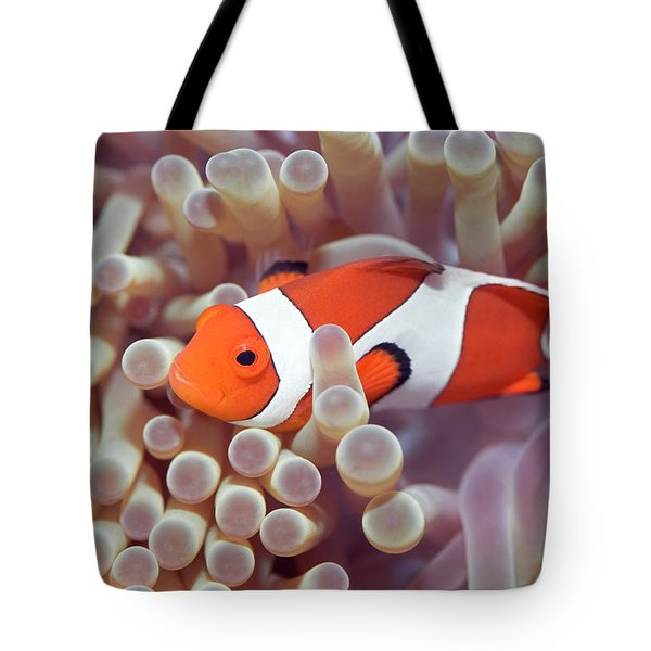 Anemone And Clown-fish Tote Bag by MotHaiBaPhoto Prints