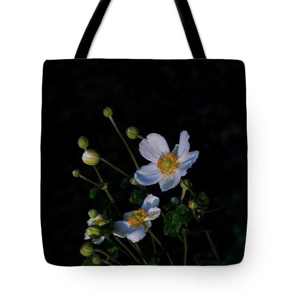 Anemone At Sunrise Tote Bag