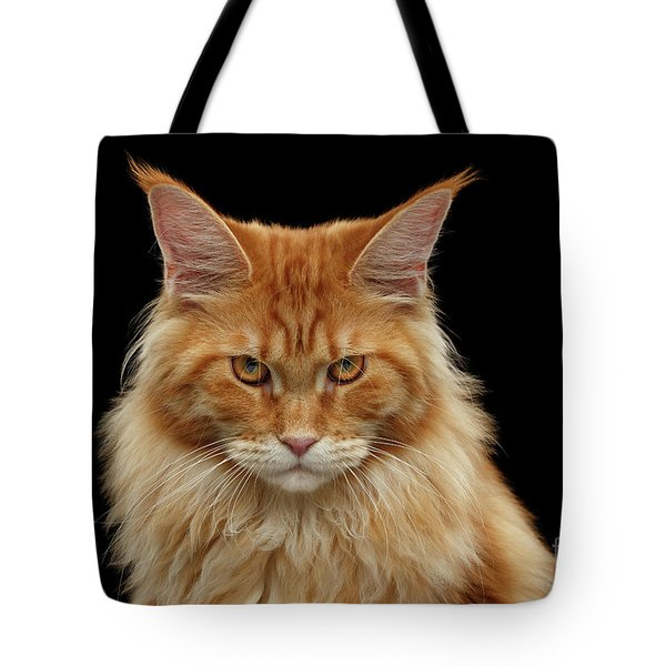 Angry Ginger Maine Coon Cat Gazing On Black Background Tote Bag by Sergey Taran