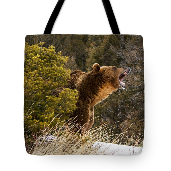 Angry Grizzly Behind Tree Tote Bag