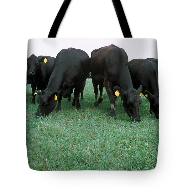 Angus Cattle Tote Bag by Science Source