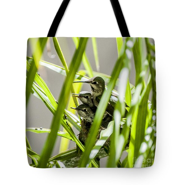 Anna Hummer On Nest Tote Bag by Daniel Hebard