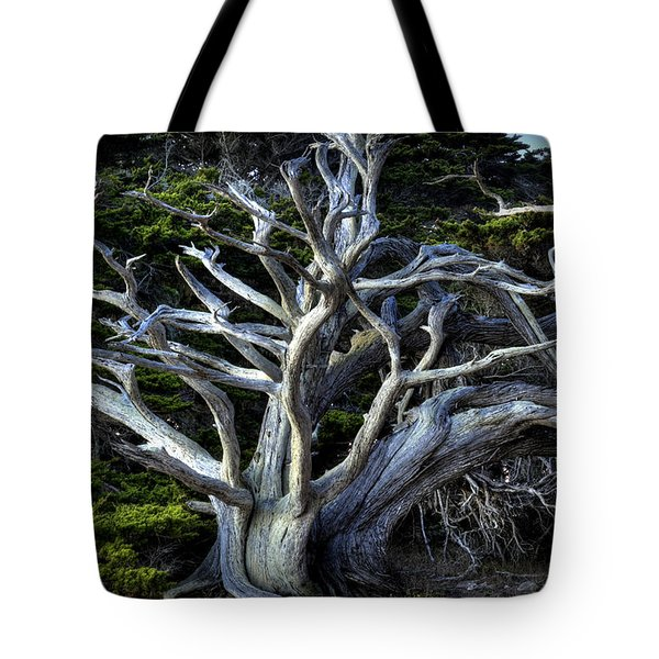 Ansel's Cypress Tote Bag