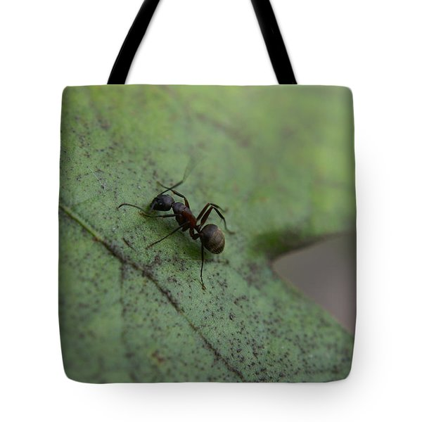 Tote Bag featuring the photograph Ant by Heidi Poulin