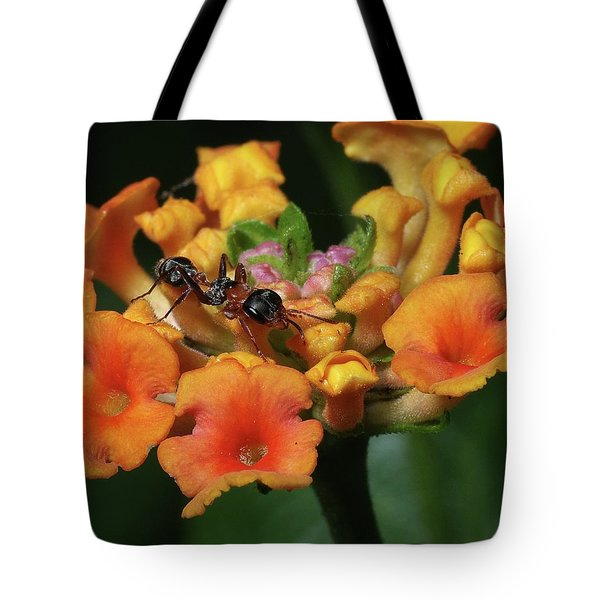 Tote Bag featuring the photograph Ant On Plant  by Richard Rizzo