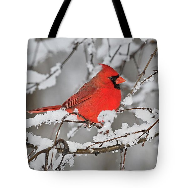 Tote Bag featuring the photograph Anticipation by Tony Beck