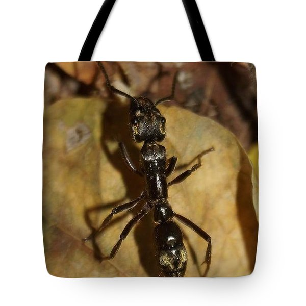 Tote Bag featuring the photograph Ants Love Rainforrests by Cindy Charles Ouellette