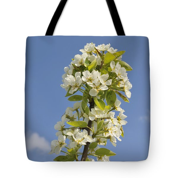Apple Blossom In Spring Tote Bag by Matthias Hauser