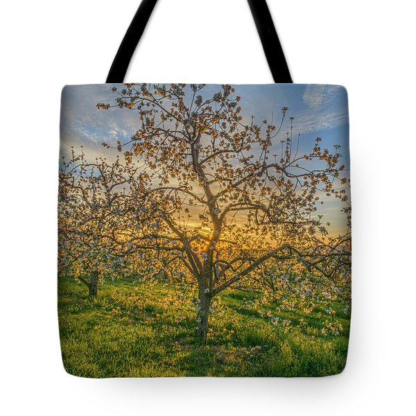 Apple Blossoms At Sunrise 2 Tote Bag
