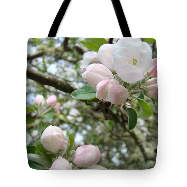 Apple Tree Blossoms Art Prints Apple Blossom Buds Baslee Troutman Tote Bag by Baslee Troutman
