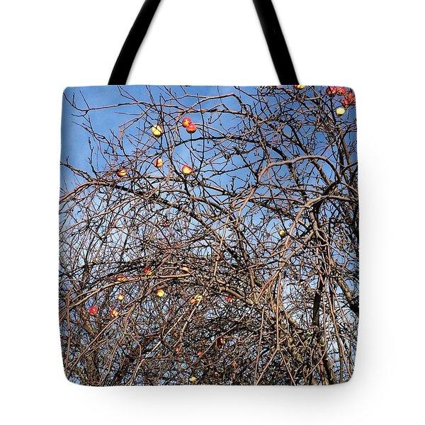 Apples In December Tote Bag by Patricia E Sundik