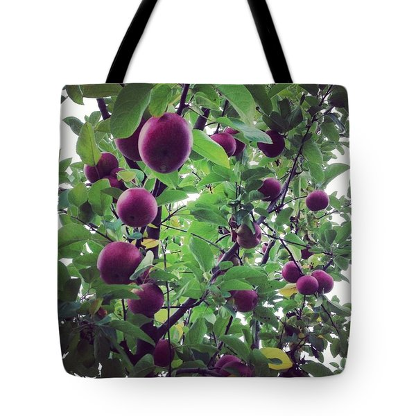 Apple Picking Tote Bag