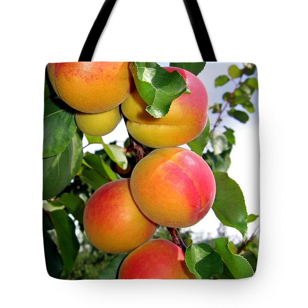 Apricots Tote Bag by Will Borden