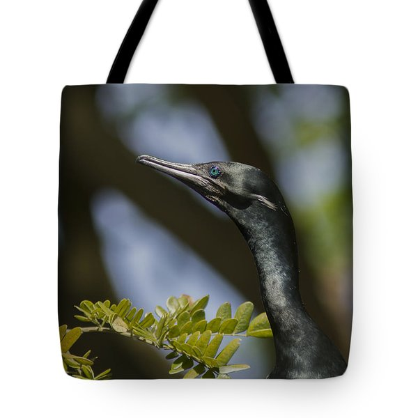 Aqua Blue Eyes - Little Cormorant Tote Bag