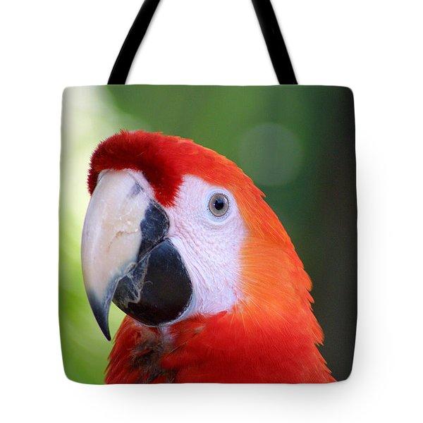 Ara Macaw Parrot Tote Bag