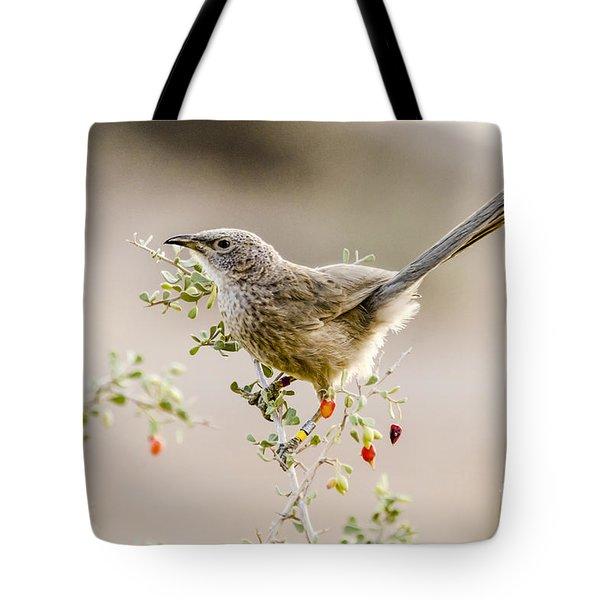 Arabian Babbler Tote Bag