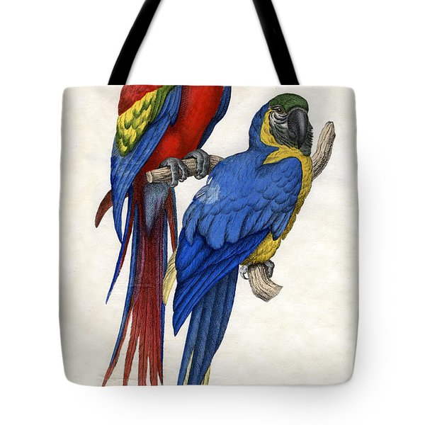 Aracangua And Blue And Yellow Macaw Tote Bag