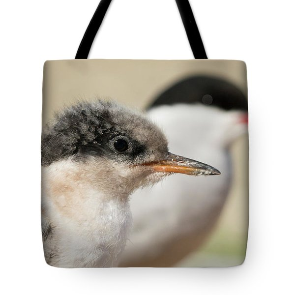 Tote Bag featuring the photograph Arctic Tern Chick With Parent - Scotland by Karen Van Der Zijden