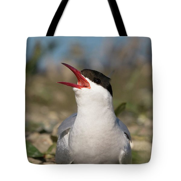 Tote Bag featuring the photograph Arctic Tern - St John's Pool, Scotland by Karen Van Der Zijden
