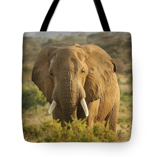 Are You Looking At Me? Tote Bag by Gary Hall