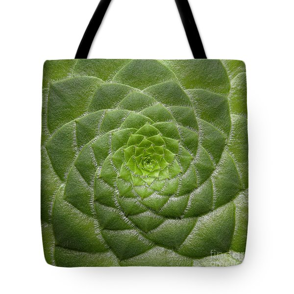Artistic Nature Green Aeonium Cactus Macro Photo 203 Tote Bag