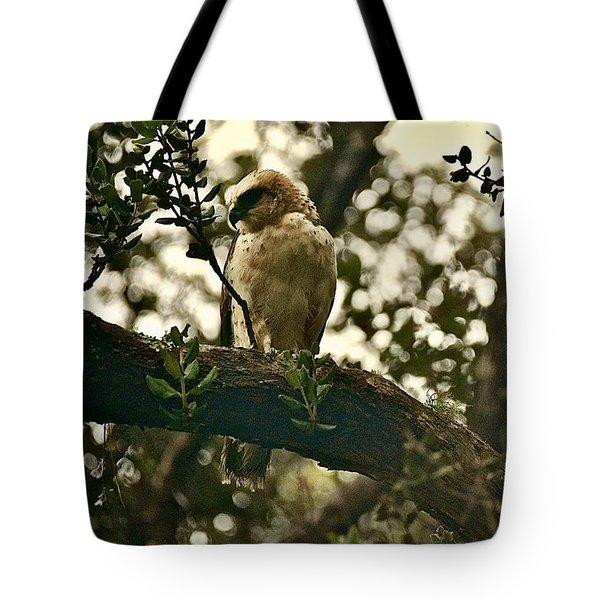 Io - Hawaiian Hawk Tote Bag