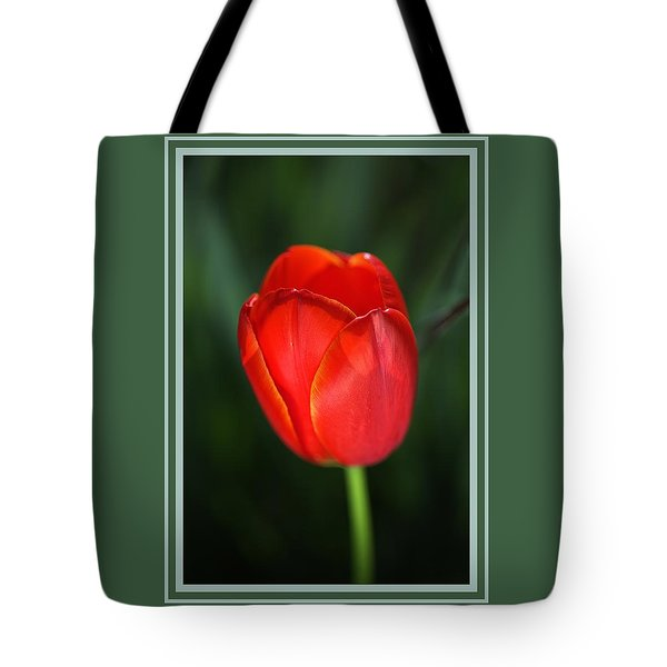 Tulip Red With A Hint Of Yellow Tote Bag