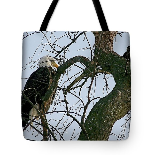 As The Eagle Looks On Tote Bag by Sue Stefanowicz