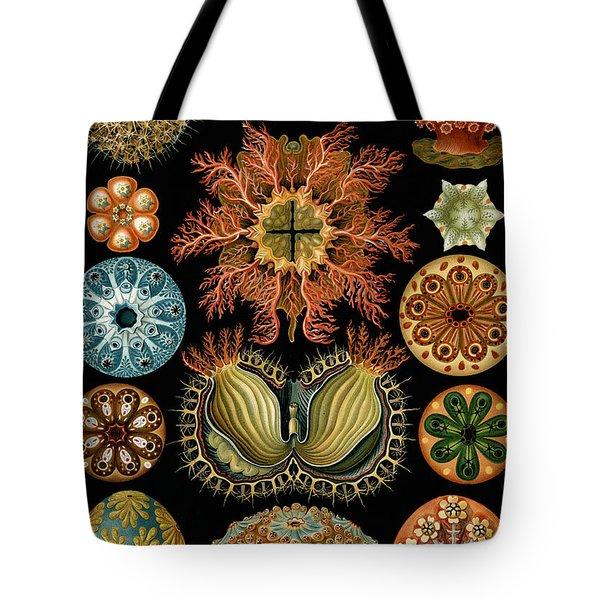 Ascidiae Tote Bag