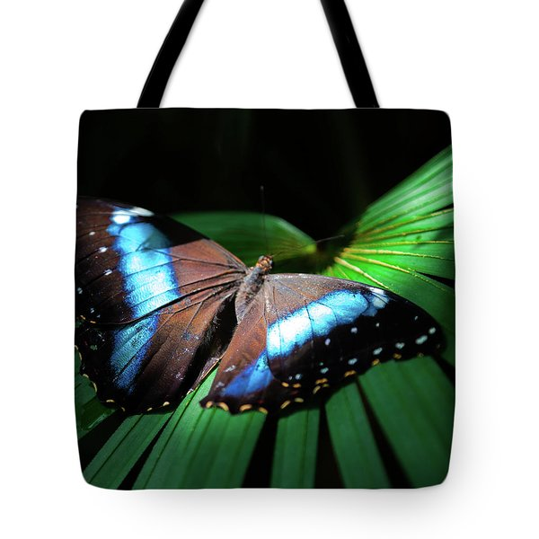Asleep Beneath The Moon Tote Bag by Karen Wiles