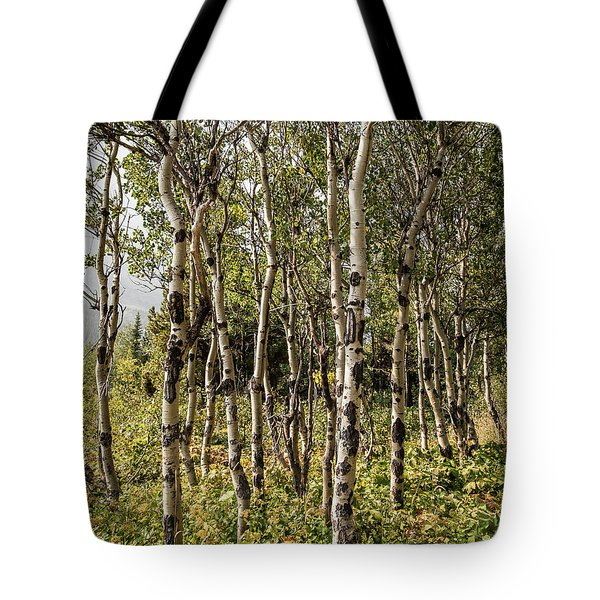 Tote Bag featuring the photograph Aspen Delight At Glacier by Lon Dittrick