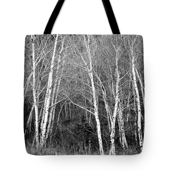 Aspen Forest Black And White Print Tote Bag