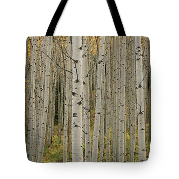 Aspen Grove In Fall, Kebler Pass Tote Bag by Ron Watts