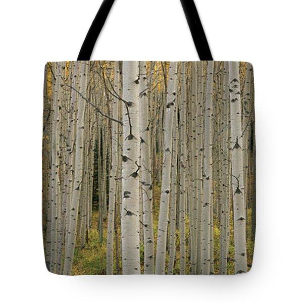 Aspen Grove In Fall, Kebler Pass Tote Bag