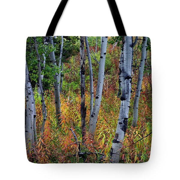 Aspen In Fall Tote Bag by Marty Koch