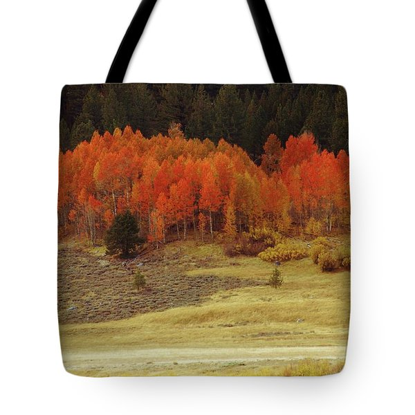 Aspen, October, Hope Valley Tote Bag by Michael Courtney