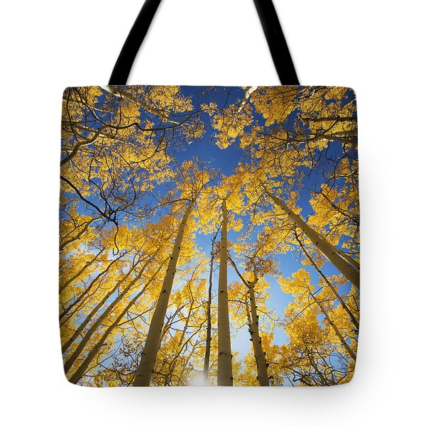 Aspen Tree Canopy 3 Tote Bag by Ron Dahlquist - Printscapes