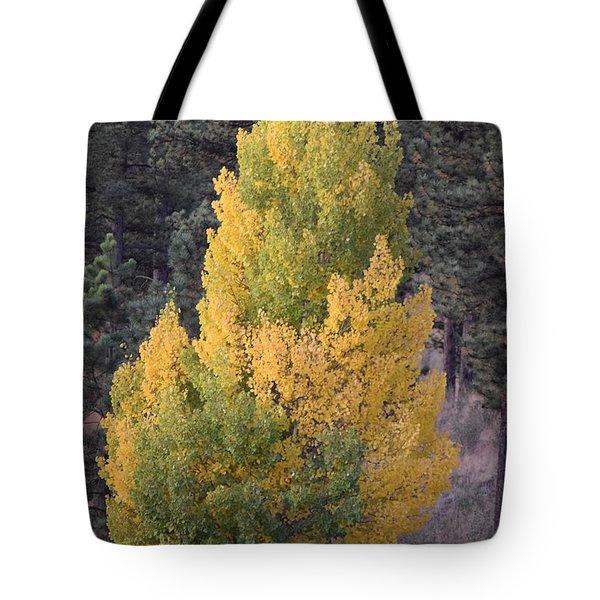 Aspen Tree Fall Colors Co Tote Bag