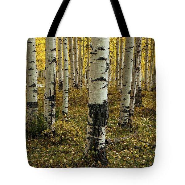 Aspens - 0245 Tote Bag