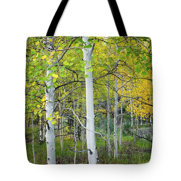 Aspens In Autumn 6 - Santa Fe National Forest New Mexico Tote Bag