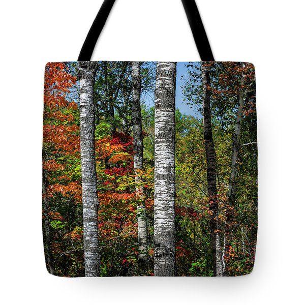 Tote Bag featuring the photograph Aspens In Fall Forest by Elena Elisseeva