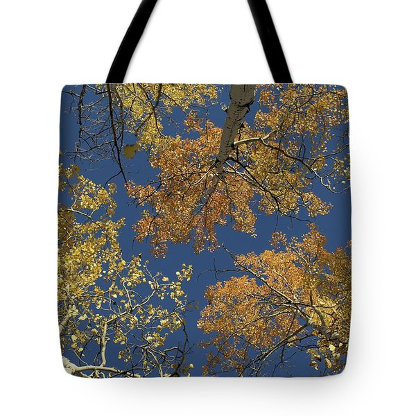 Tote Bag featuring the photograph Aspens Looking Up by Mary Hone