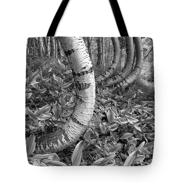 Aspens With Curves Tote Bag