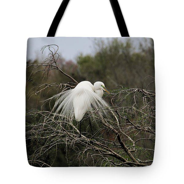 Attractive Plumage Tote Bag