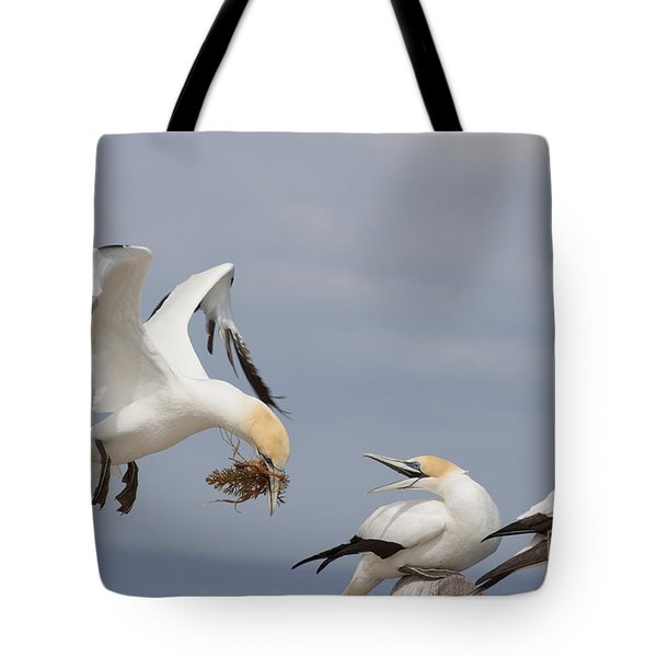 Australasian Gannet With Nesting Material Tote Bag