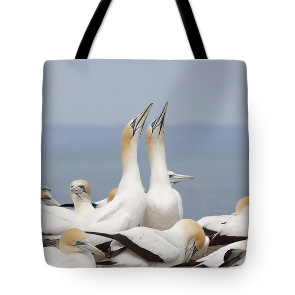 Australasian Gannets Courting Tote Bag