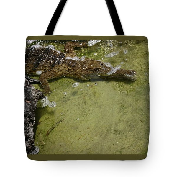 Australia Crocodile 1 Of 3 Tote Bag
