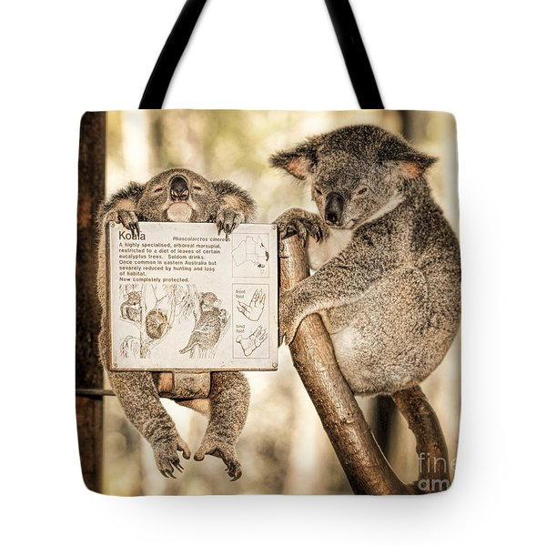 Tote Bag featuring the photograph Koala Australia  by Juergen Held