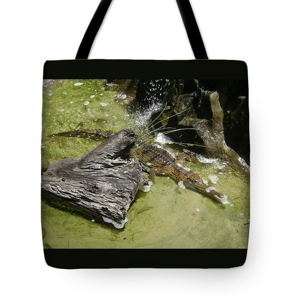 Australian Crocodile 3 Of 3 Tote Bag